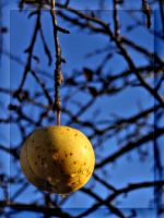 Last Apple Standing... by Yancis