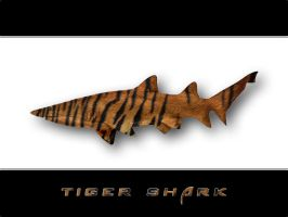 Tiger Shark by fission1