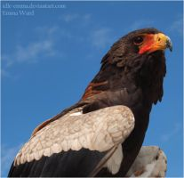 Bateleur Eagle by Idle-Emma