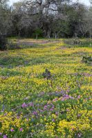 Field of Flowers 2 by Ironmountain01