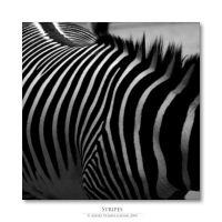 STRIPES by donk00085
