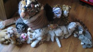 My cat collection by orcafinatic