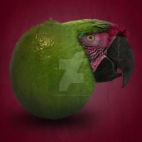Parrot-Lime by x-Emma-Billi-x