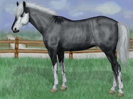 Animated bid for this lovely mare by Pumpi12Denise