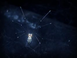 domestic spider II by danamis