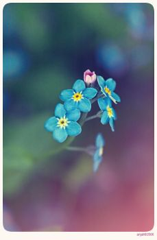 Forget me not - 7 by anjali