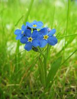blue flower by Didix1122