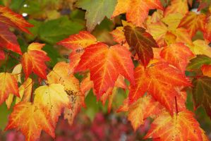 Autumn Changes 4895522 by StockProject1