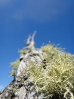 Lichen it just like that by Carrion-Marionette