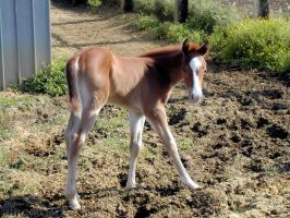Little Horse 1 by Ivette-Stock