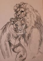 Lions by MarySueLosthername