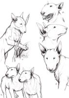 Bull Terrier Heads by LadyBottleTop