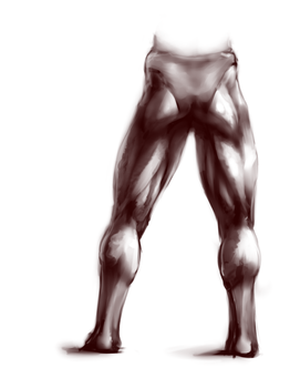posterior leg practice by Wolframclaws