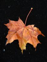 Signs of autumn II by Wolverica