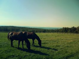 Horses by Champineography