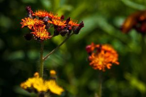 Forest Wild Flowers Macro 2 by Witch-Dr-Tim