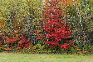 fall 2015 - 14 by LucieG-Stock