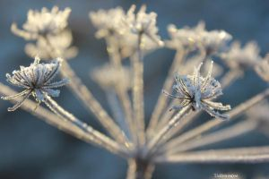Ice and light by stellazvezdica