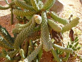 Cactus 4 by Spiteful-Pie-Stock