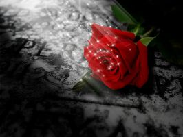 Like a Rose on the grave of Lo by telepadune
