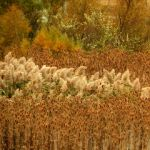Shades of Autumn 2015, 5 by MadGardens
