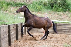 KM Old TB head up turning front legs up by Chunga-Stock