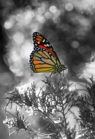 another monarch butterfly by jetsetaphrodite