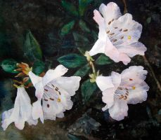 White Rhododendron by Mad-Margaret