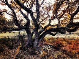 The Old Oak Tree by TheGerm84