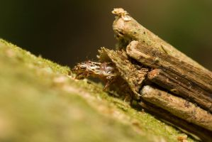 Bagworm by melvynyeo