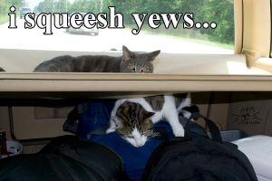 LOLcat: i squeesh yews by LostKitten