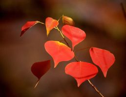 Mostly RED 11-23-11 by Tailgun2009