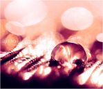:: pearly drop :: by light-from-Emirates