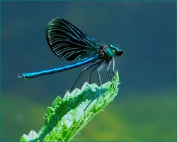 Dragonfly 2 by indja-art