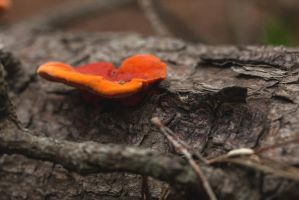 The forest floor - April fungi I by AlejandroCastillo