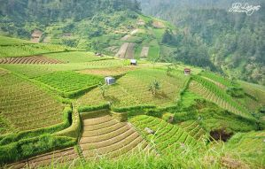 A hill with terraces for rice paddies by jnrlavigne