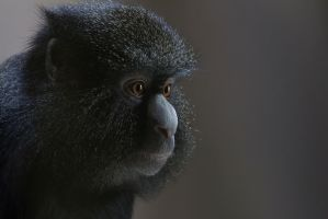 Monkey by Poulus1967