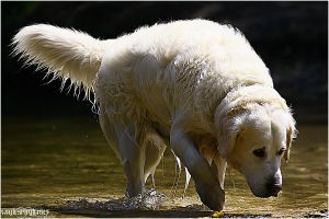 .:walking though the water:. by WhiteSpiritWolf