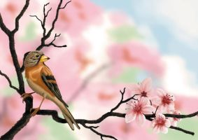 Finch and Cherry Blossoms by Renegar-Kitsune