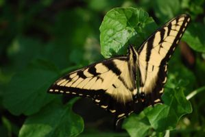 Butterfly Wings I by spectral-stock