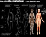 Female Anatomy Study V2 by jcevil