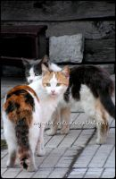 658 by evy-and-cats