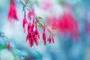 Rain flowers by FreyaPhotos