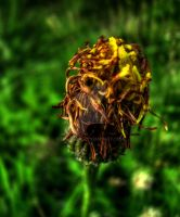 Withered by HAL-2oo6