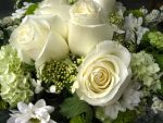 White roses by Anchi3