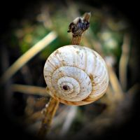 Snail II by MarinaCoric