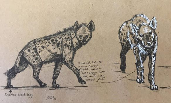 Hyena Studies 4 by Waterbear