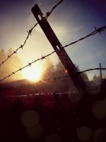 Good Morning Barbed Wire and Spider Webs by underneath-the-paint