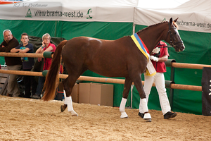 Austrian Warmblood Mare_6 by CalyHoney
