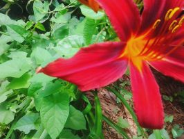 Red Flower (3) by LMW-The-Poet